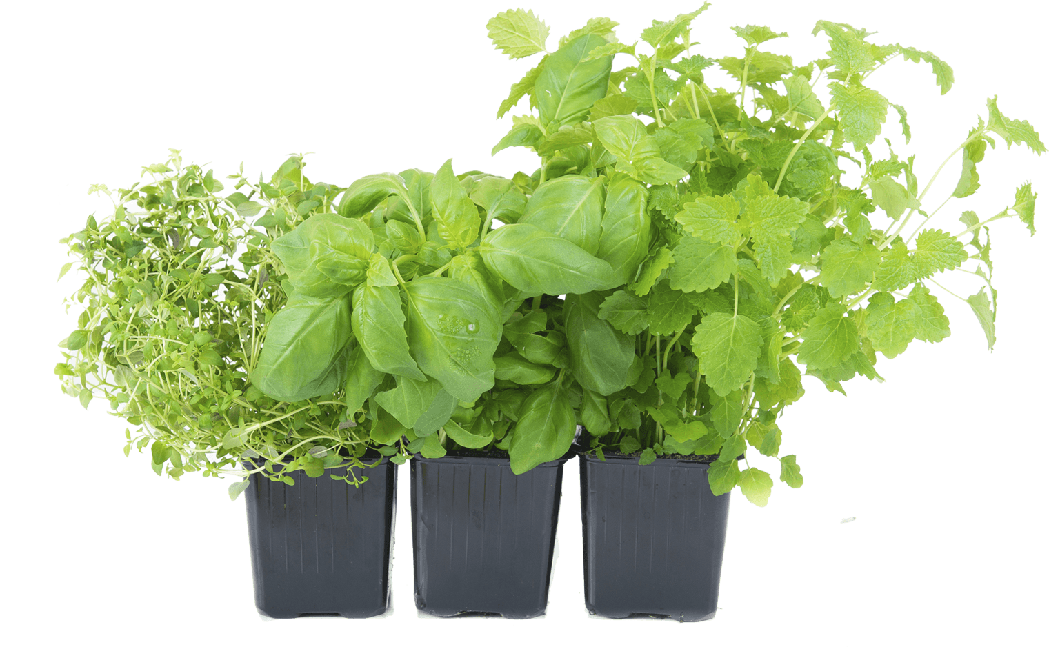 Growing Vegetables And Herbs In A Container Garden