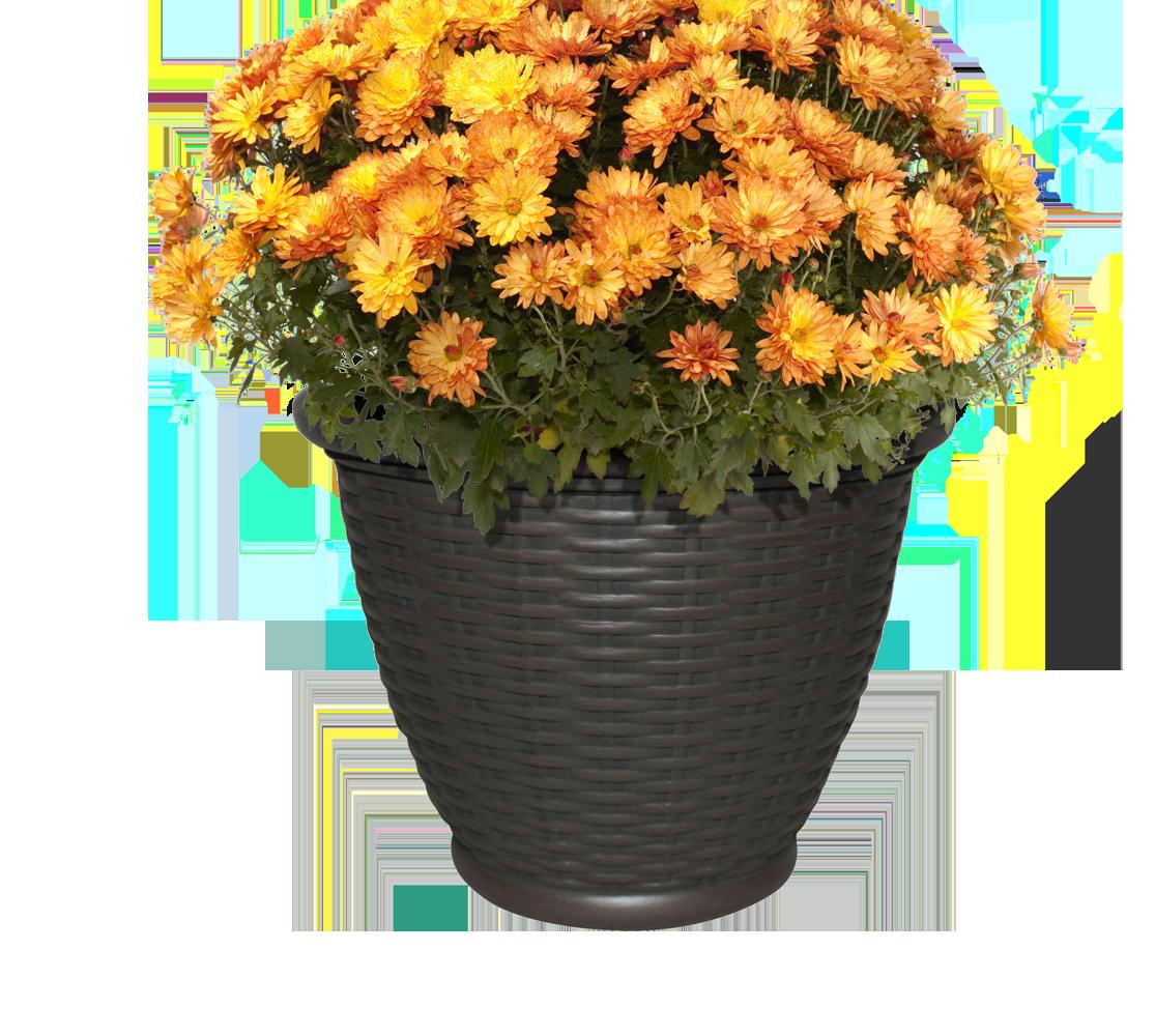 change-plants-seasonally