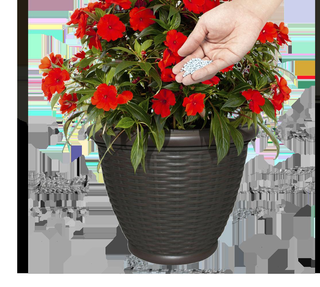 fertilize-regularly