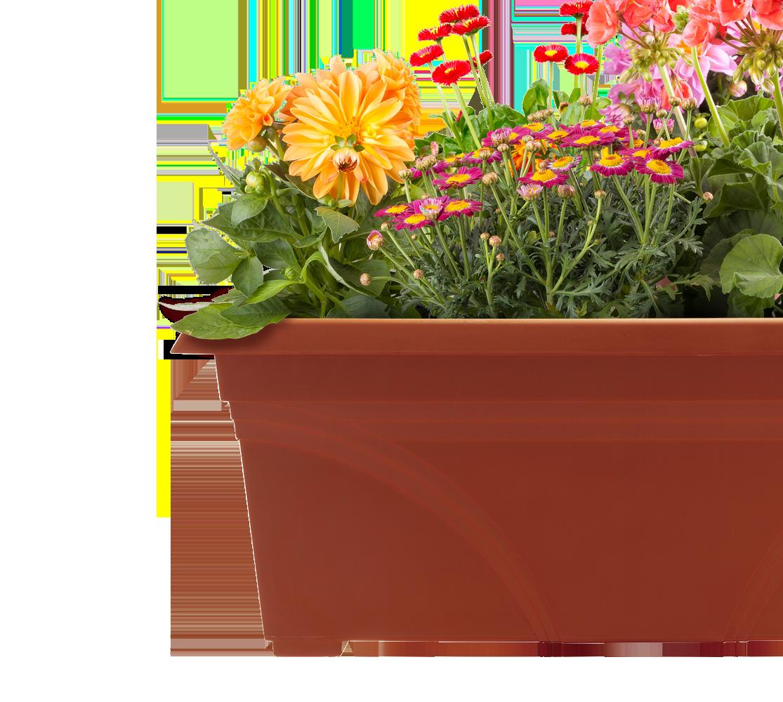 maintain-your-container-garden