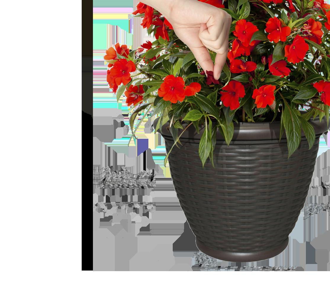 remove-dead-flowers