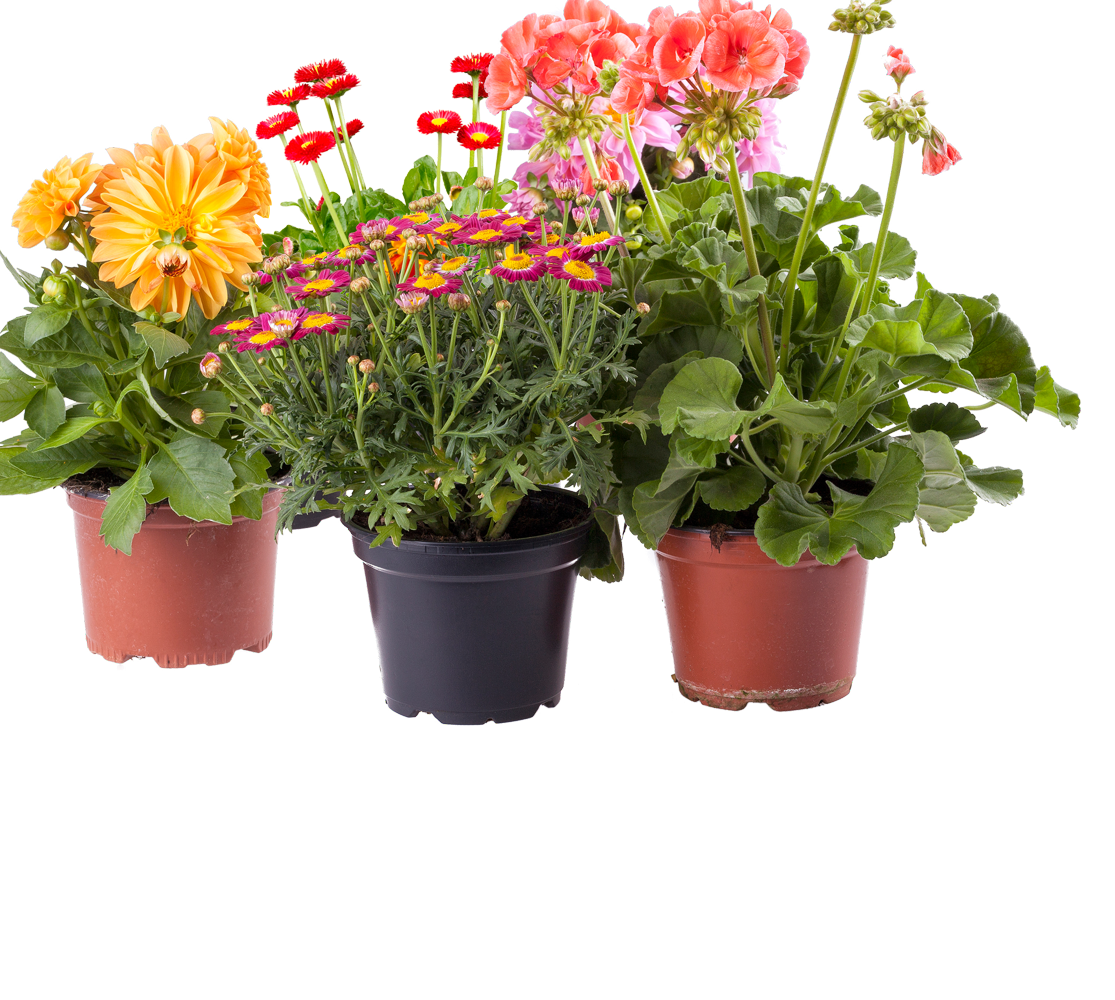 Outdoor Potted Plants Png