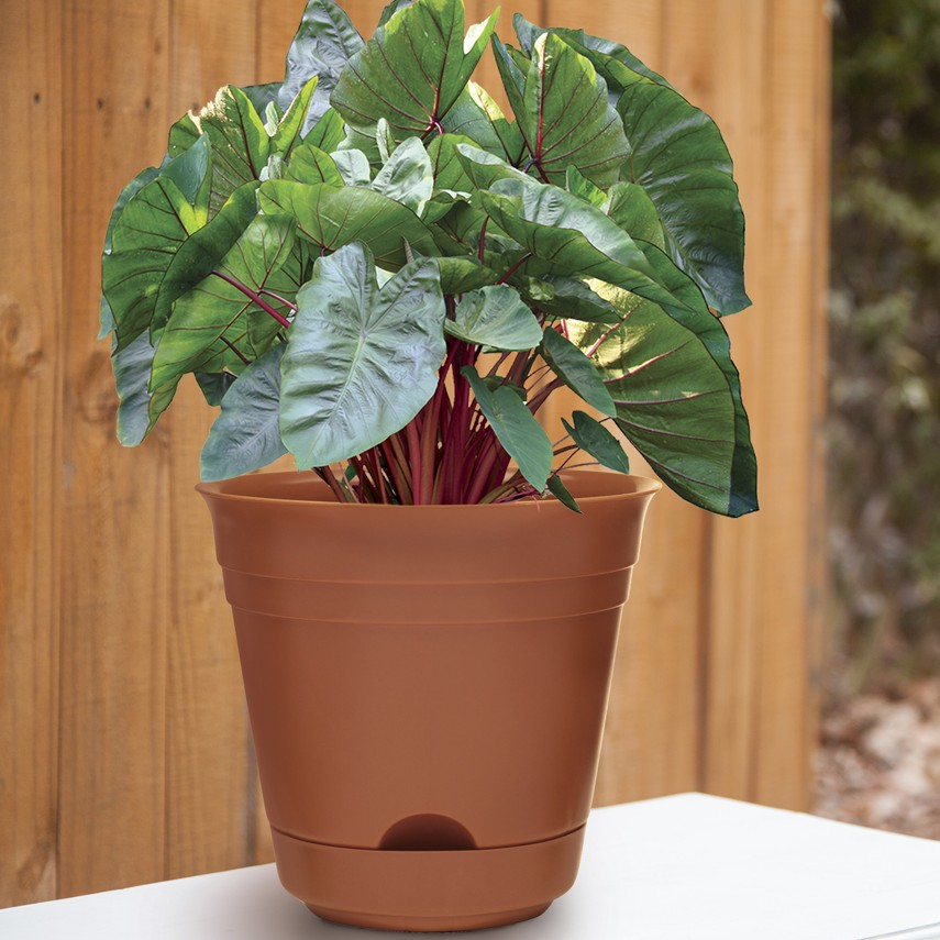Dynamic Design 9 Sonoma Self Watering Planter Clay Southern Patio