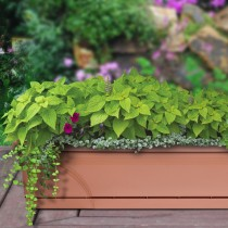 "24"" Medallion Window Box, TerraCotta"