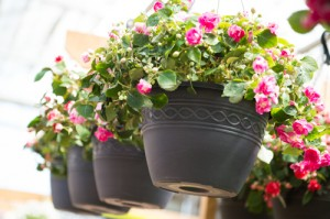 Grower-Hanging Baskets - 2