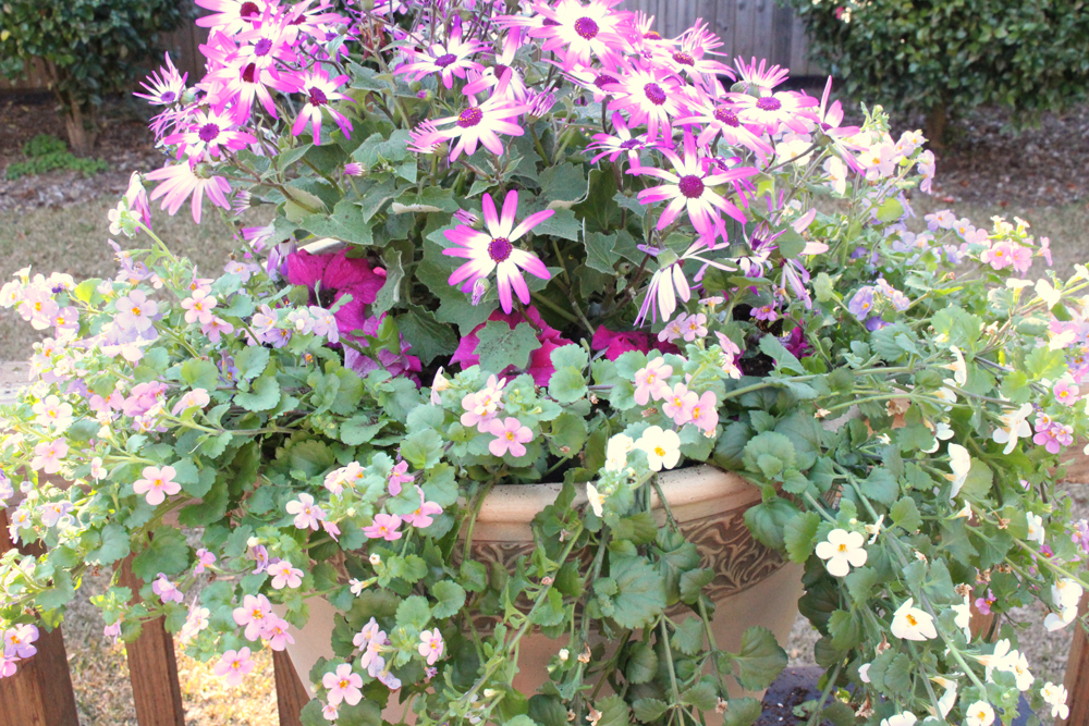 Creating A Thriller, Filler, And Spiller Effect In A Container Garden | Southern  Patio