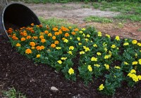 How to Create a Spilled Flower Garden Whiskey Barrel