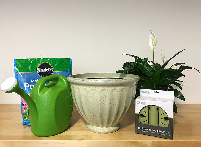 caylo and self-watering insert