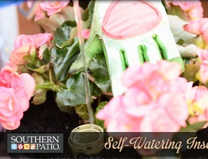 How to Use a Self-Watering Insert