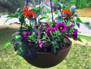 "12"" Self-Watering Victoria Hanging Basket"