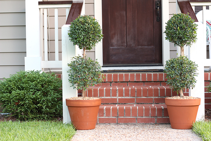 Topiary Trees How To Plant In Pots And Planters Southern Patio