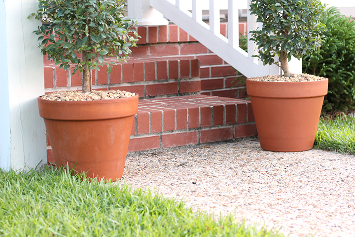 terracotta pots and topiary trees