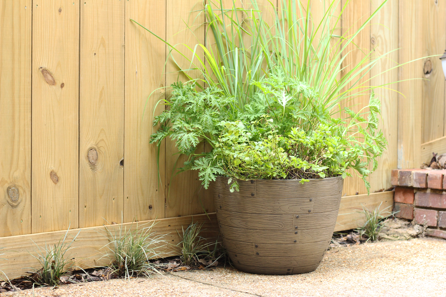Planting A Mosquito Repellent Container Garden Southern Patio