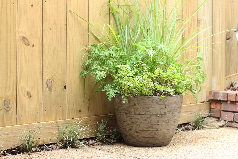 mosquito-repellent container garden