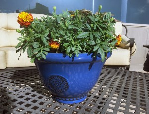 mosquito repellent container garden