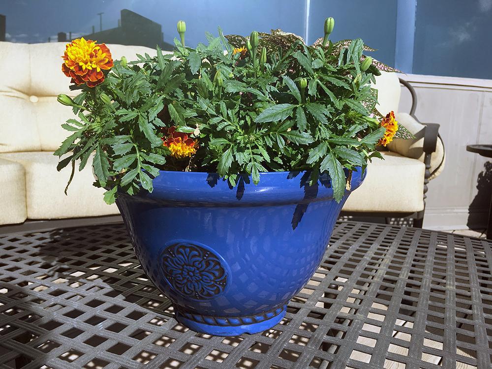 Container Gardening Under $40