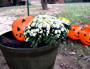 fall mums display ideas