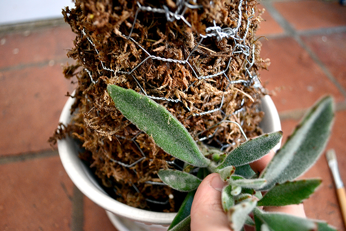 13 succulents-again