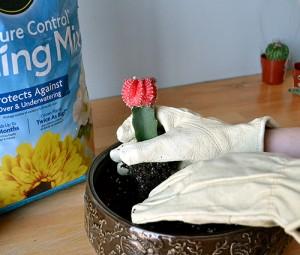 Position cactus plant