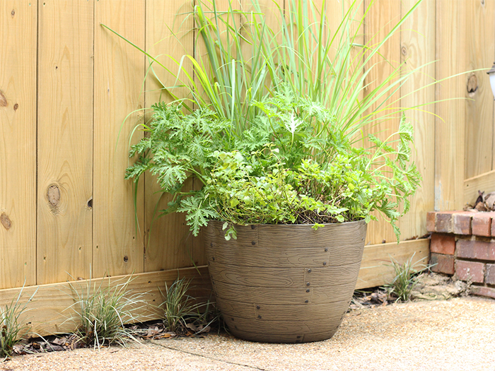 mosquito-repellent container garden
