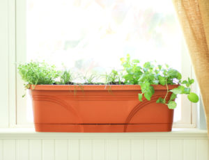 Growing-Herbs-Indoors-During-Summer-or-Winter