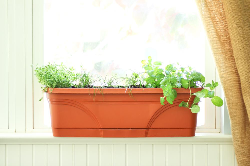 Growing-Herbs-Indoors-During-Summer-or-Winter