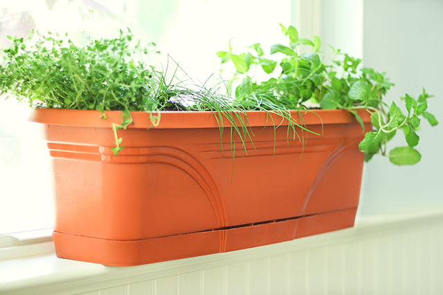 Terracotta-Window-Box-with-Indoor-Herbs-for-Summer