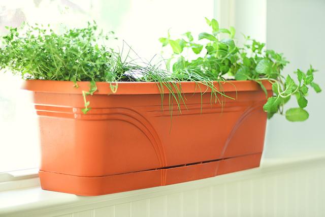 Terracotta-Window-Box-with-Indoor-Herbs-for-Summer