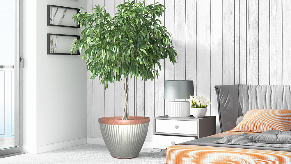 Indoor Trees How To Garden Inside Your Home Southern Patio