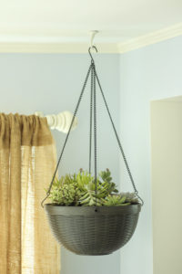 Planter basket for succulents