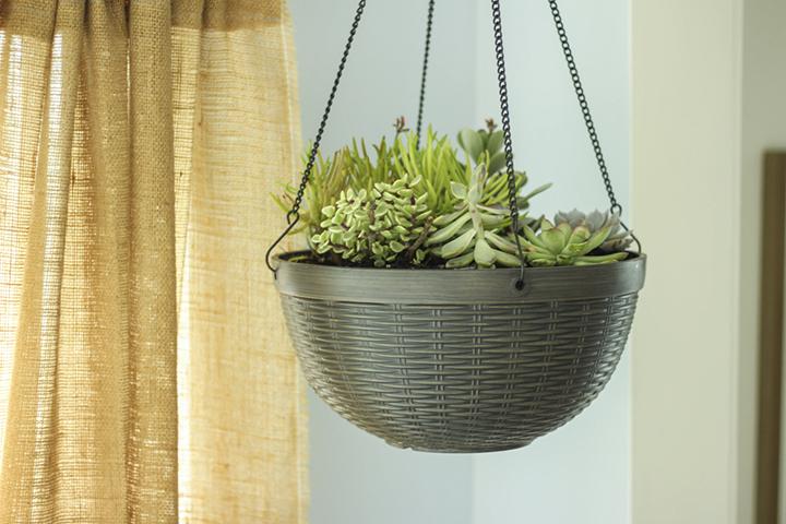 Succulent hanging basket inside