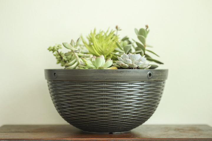 Using hanging basket as bowl planter for succulents