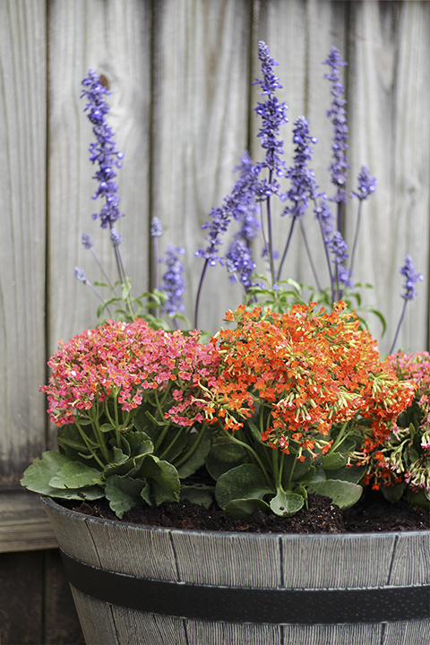Adding Filler Plant to Container Garden