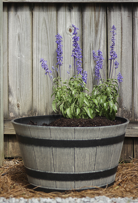 Adding Thriller Plant to Container Garden