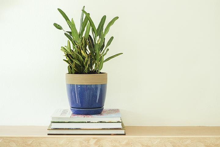 Blue Ana Pot for Inside Plants