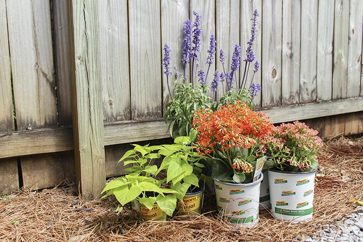 Choosing Plants for Outdoor Container Garden