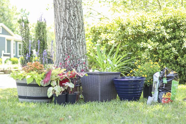 shop online for gardening supplies