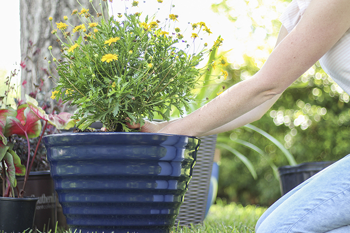 gardening as a distraction