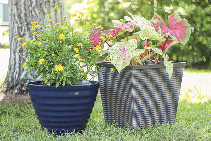 gardening supplies can be ordered online