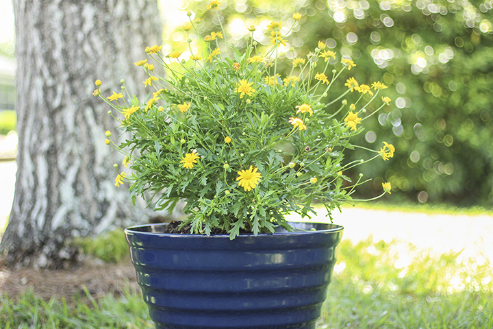 navy beehive planter with twist and lock saucer