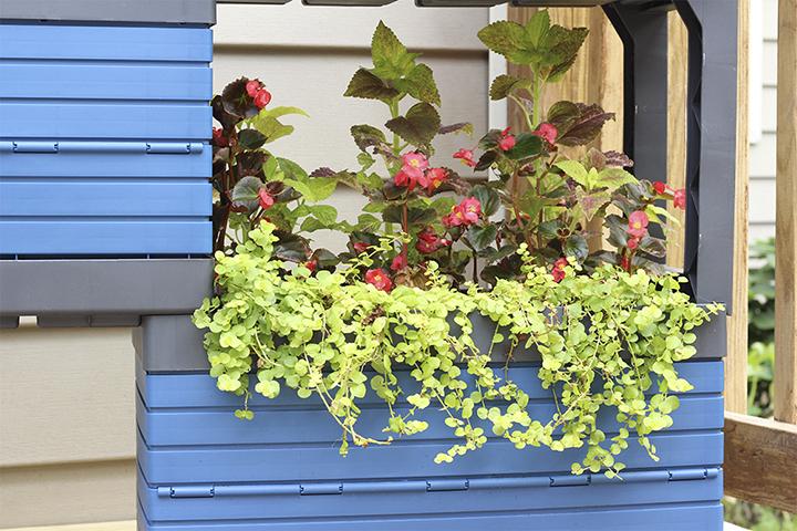 Growing Flowers in FlexSpace Garden