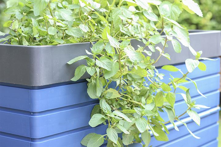 Growing Herbs in FlexSpace Garden