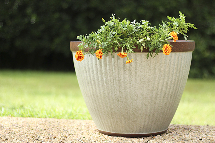 Large Planter with Annuals and Fall Seeds