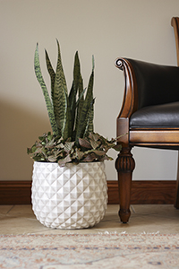 tall Pineapple planter