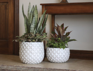 indoor container gardening in winter