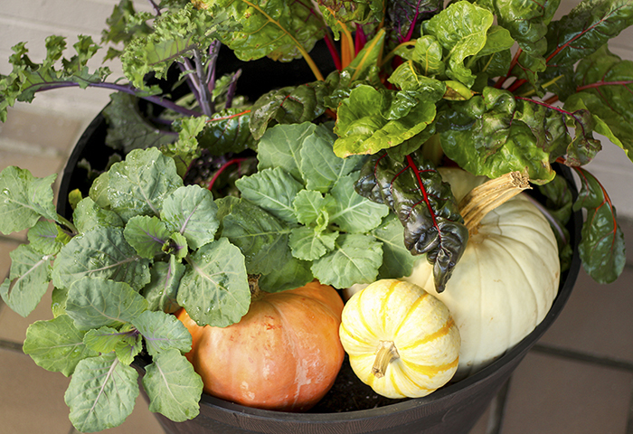 How to Use Whiskey Barrel Planter for Fall