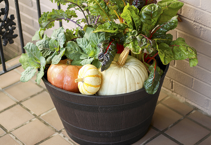 Pumpkins and Plants in Same Planter