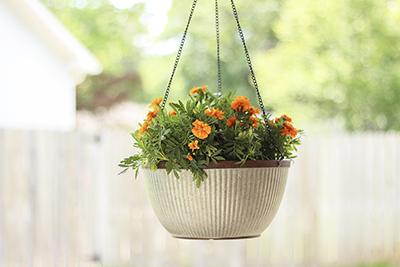 westlake hanging basket