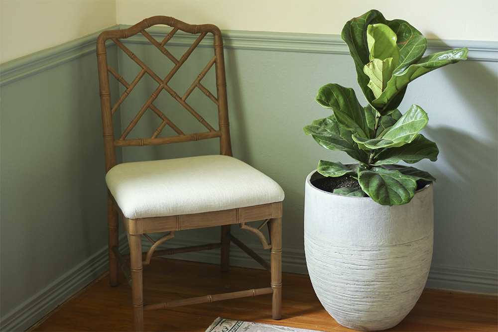 Southern Patio Unearthed Planter holding Ficus tree next to chair