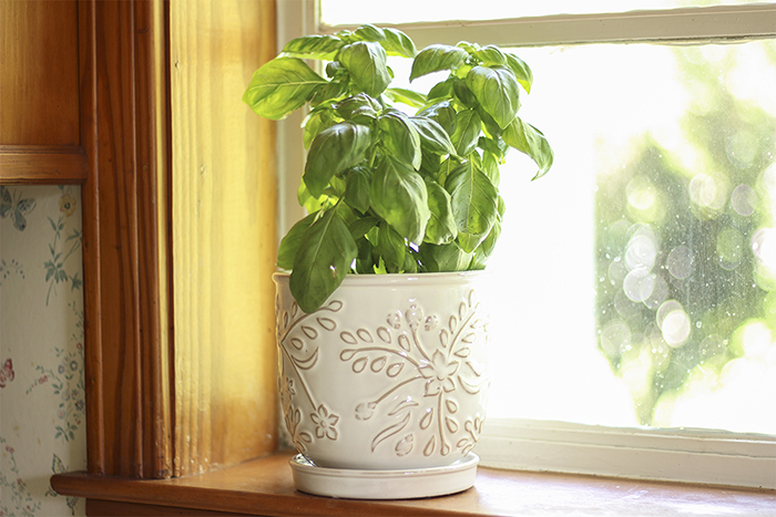 small white ceramic pot with basil